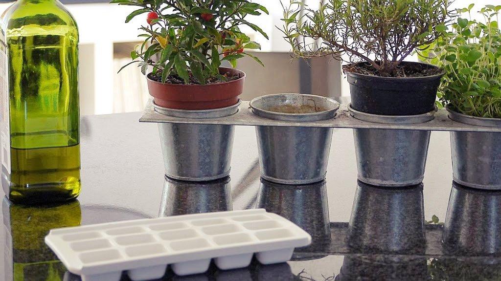 Jak przechowywać świeże zioła?